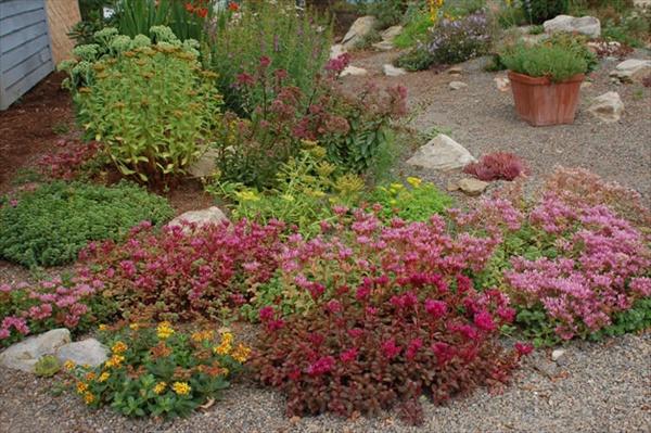 succulent-garden-ideas